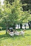 Kerbl PoultryNet Geflügelnetz, Nicht Elektrifizierbar, 25m x 112cm, Grün