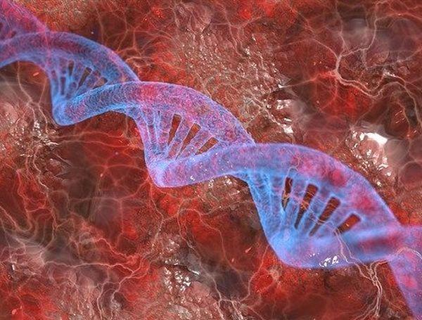 Hühnerfutter Test genmanipulierte Zutaten